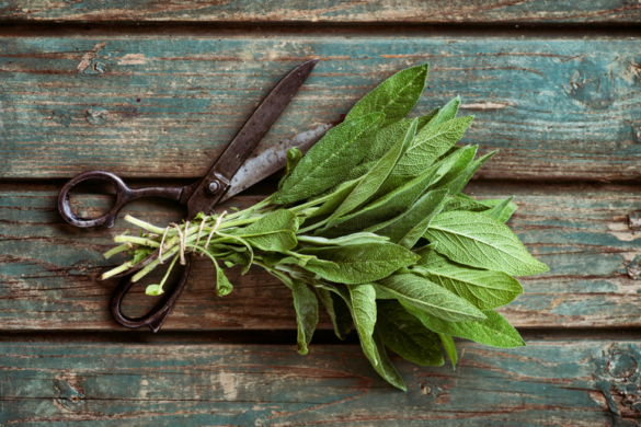 Health and Beauty Benefits of Sage