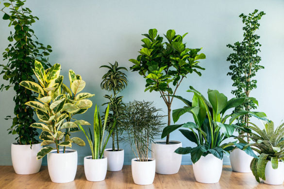 TURN YOUR HOME INTO A PINTEREST WORTHY JUNGLE FULL OF PLANTS AND FLOWERS.