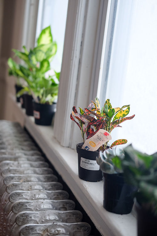 Turn your home into a Pinterest worthy jungle full of plants and flowers